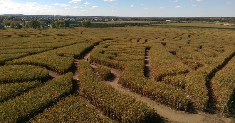 View of Richardson Farm corn maze