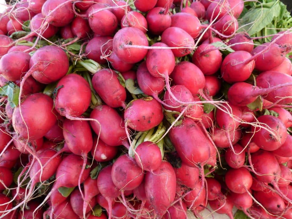 Radishes from Cary Farmers Market.