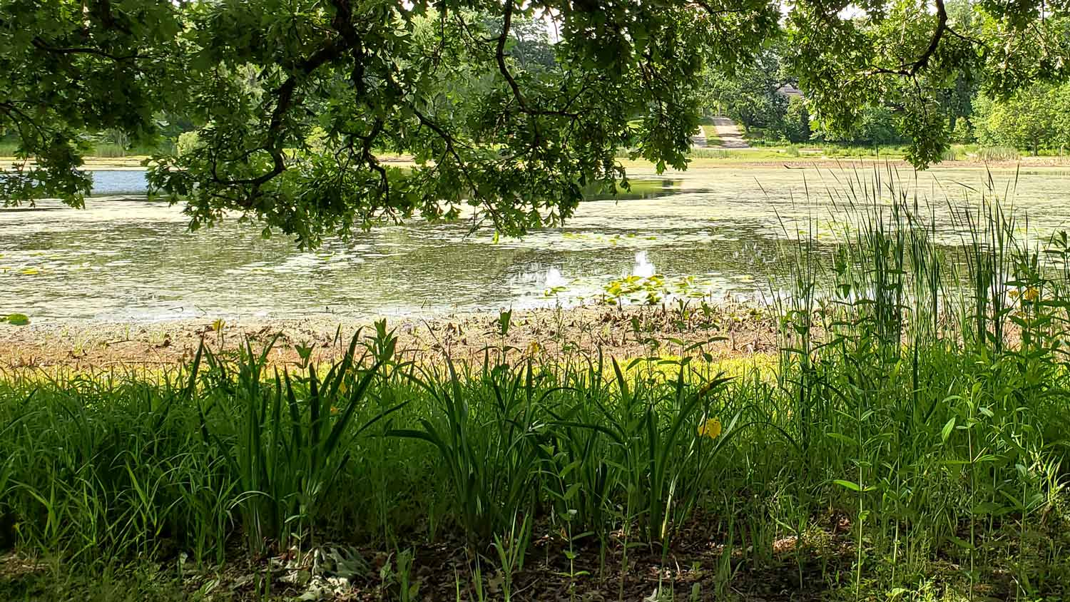 View of pond under tree canopy at Veteran Acres Park.