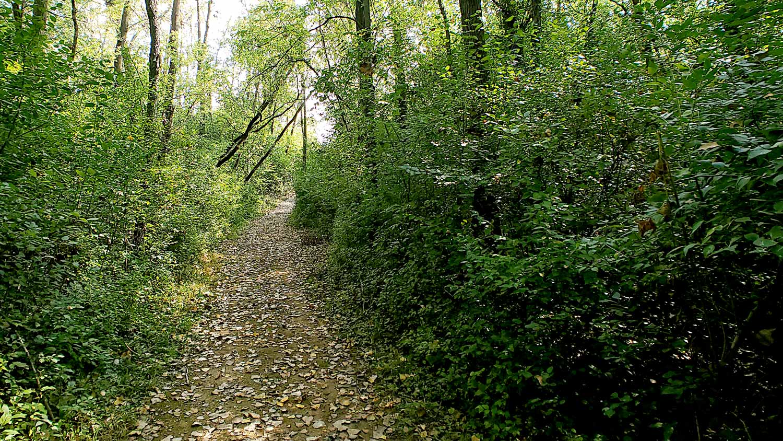 Hiking path through The Hollows.