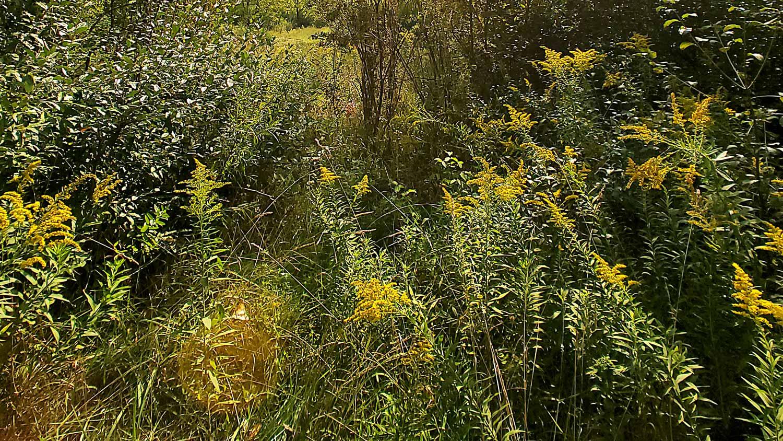 Yellows and greens along the hiking path at The Hollows.