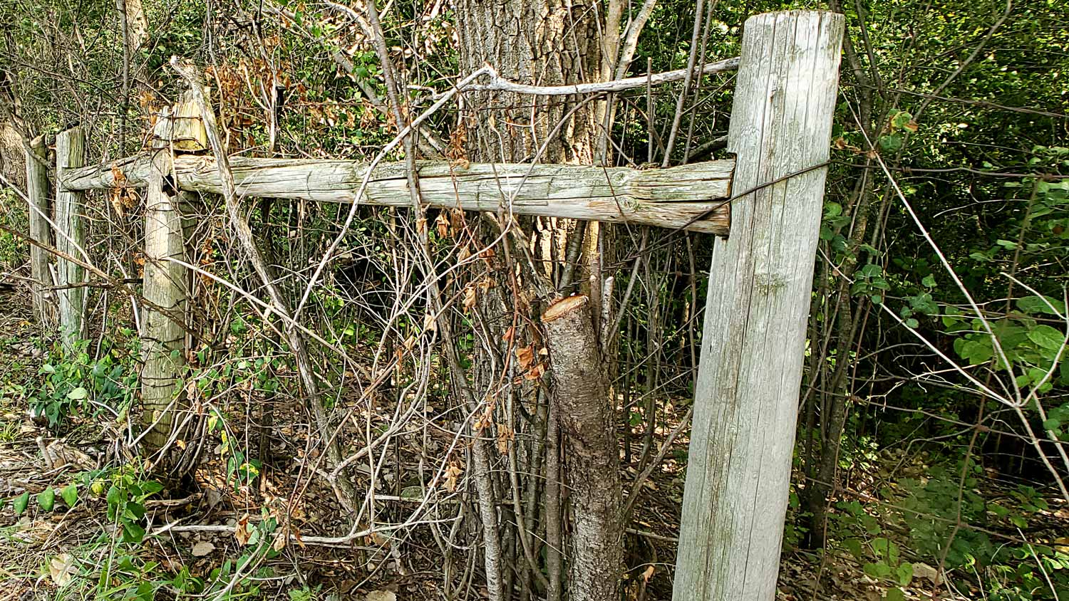 A weathered, long-standing fence line at The Hollows.